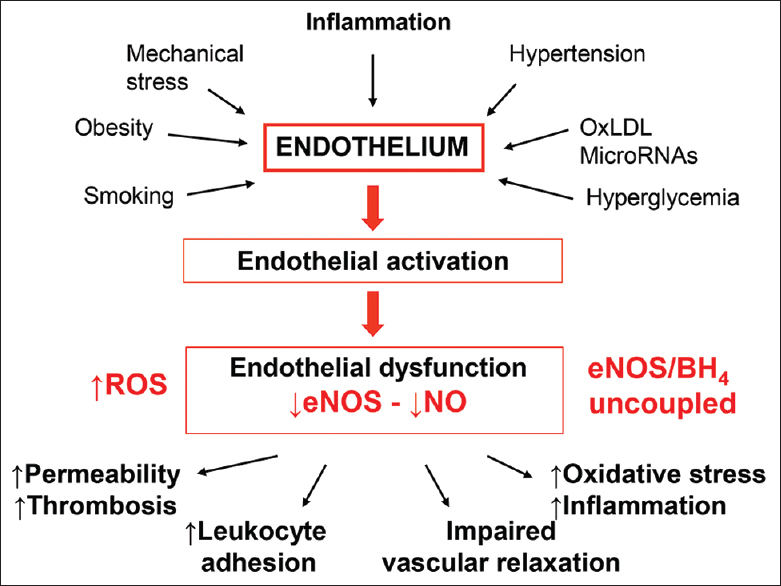 Figure 1: Endothelial dysfunction. Endothelial dysfunction is a common end point for a variety of different insults. These include systemic inflammation characteristic of many rheumatic diseases as well as traditional cardiovascular risk factors. Although most commonly associated with increased reactive oxygen species, uncoupling of tetrahydrobiopterin (BH4) from endothelial nitric oxide synthase and reduced biosynthesis of nitric oxide, it also involves widespread abnormalities in constitutive endothelial function and predisposes to atherogenesis