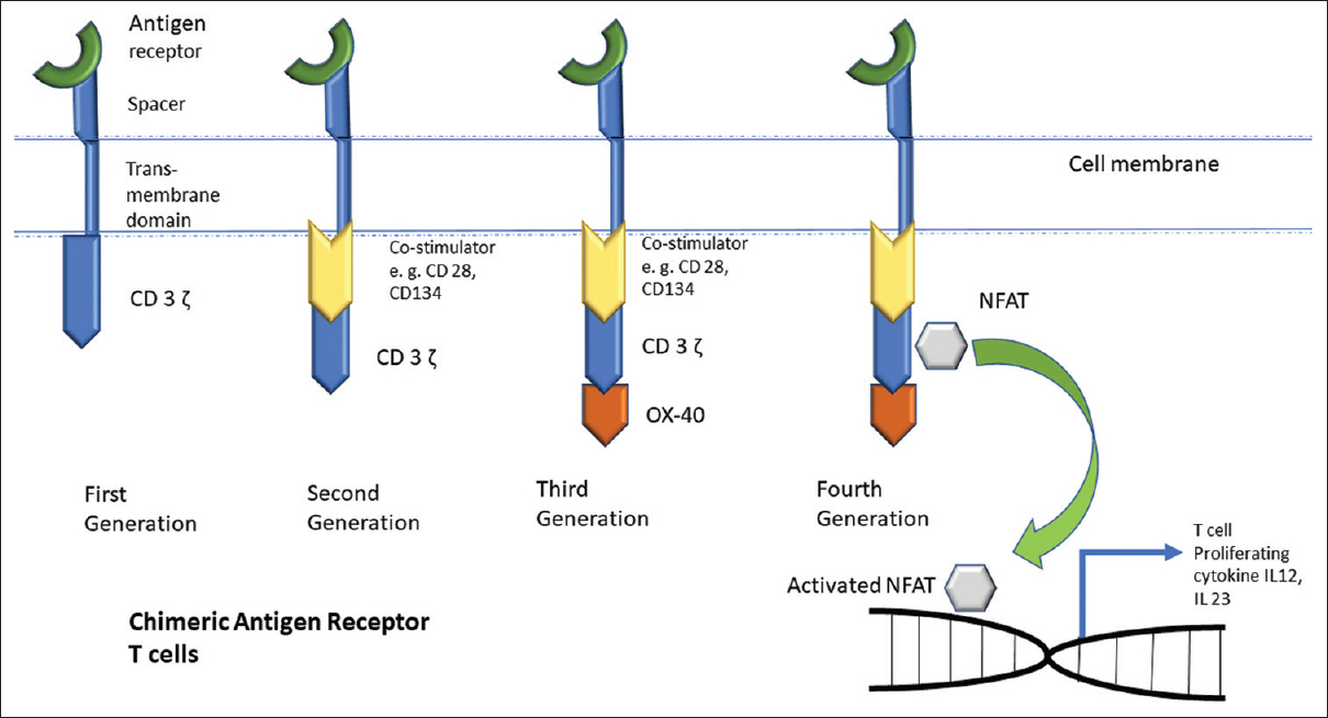 Figure 1: Generations of CAR-T cells. CD: Cluster of differentiation; NFAT: Nuclear factor activator of T-cells; IL: interleukin, CAR-T cells: Chimeric antigen receptor T-cells